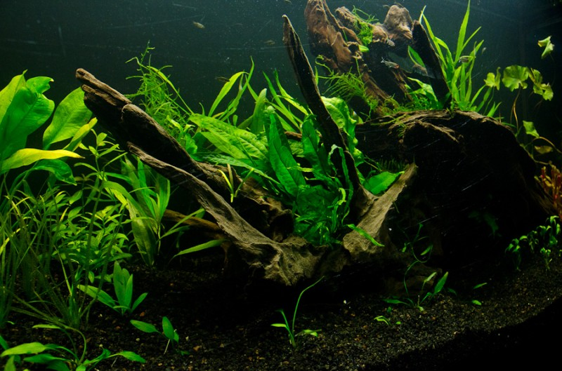 Fluval-Osaka-320-Aquascape-14