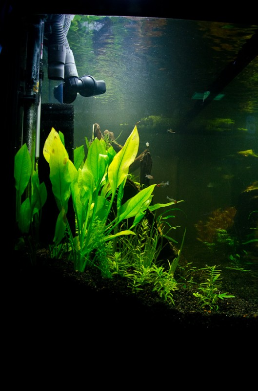 Fluval-Osaka-320-Aquascape-16