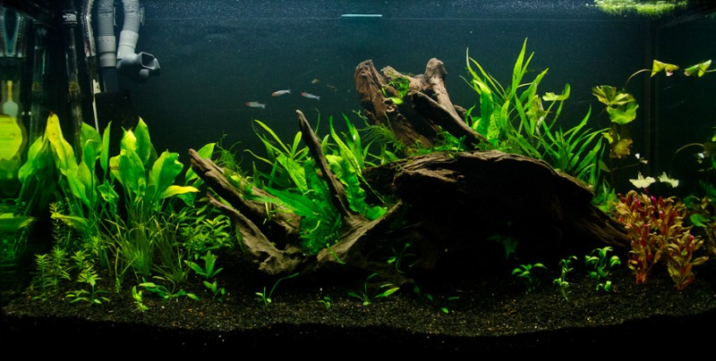 Fluval-Osaka-320-Aquascape-18