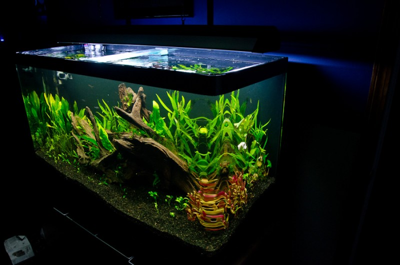 Fluval-Osaka-320-Aquascape-2