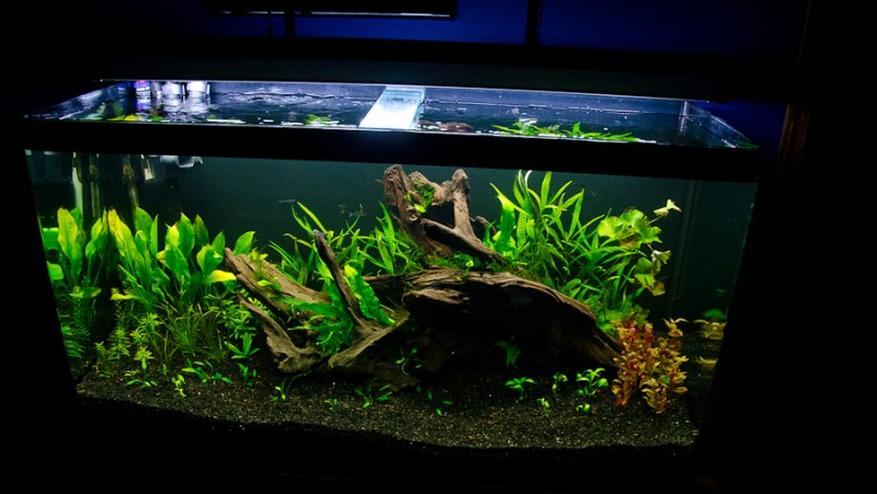 Fluval-Osaka-320-Aquascape-3