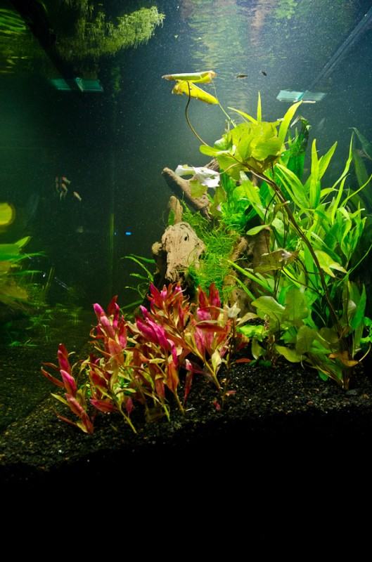 Fluval-Osaka-320-Aquascape-4