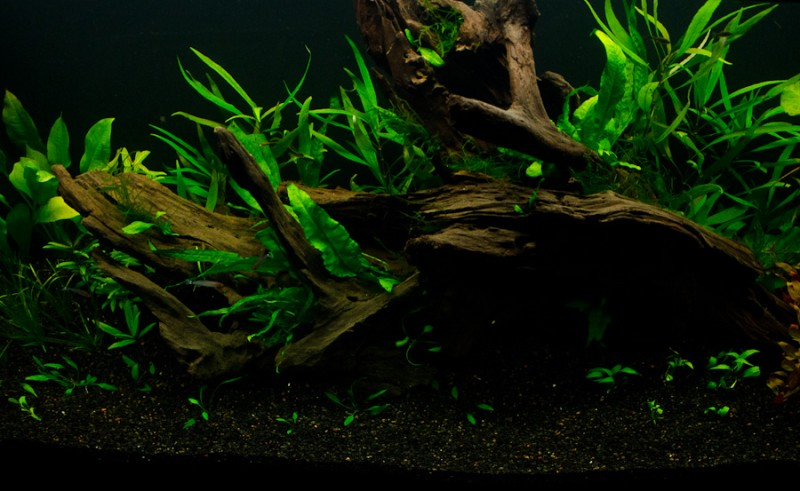 Fluval-Osaka-320-Aquascape-5