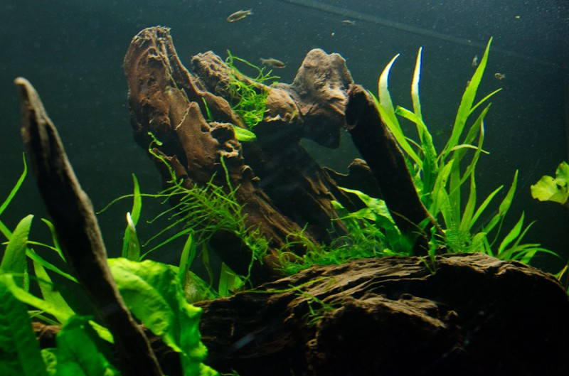 Fluval-Osaka-320-Aquascape-7