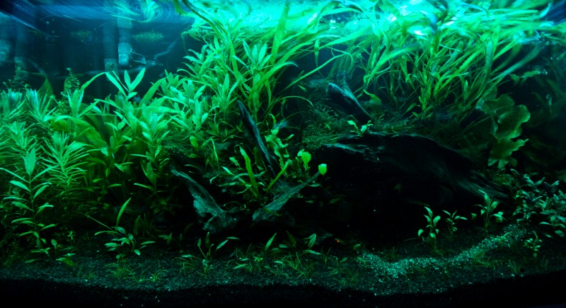 oska-forest-tank-night-shot